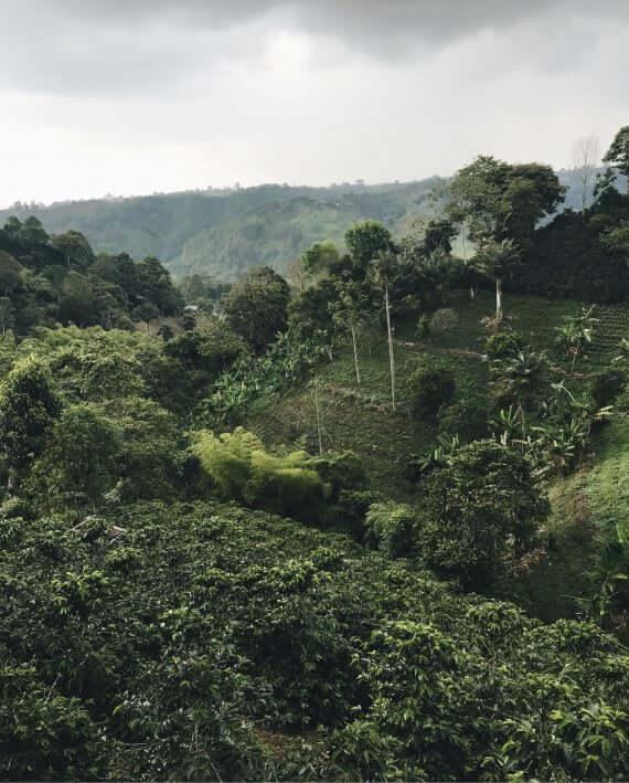 COLOMBIA CALDAS